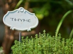 boost digestion thyme
